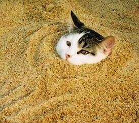 kitty_litter_hazardous_waste