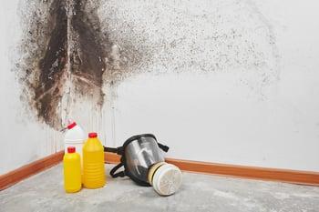 best mold remediation companies